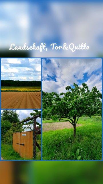 Landschaft, Tor&Quitte